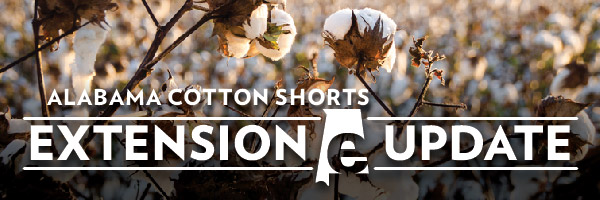 Alabama cotton shorts header image